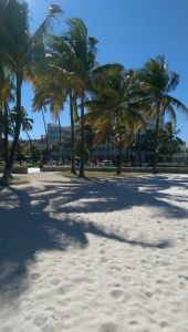 The famous Palm